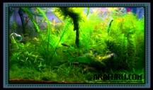 Cara Membasmi Algae di Akuarium/Aquascape