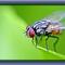 4 Tips Mengusir Lalat dari Rumah