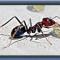5 Tips Mengusir Semut dari Rumah