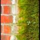 Cara Paling Mudah Hilangkan Lumut di Tembok!