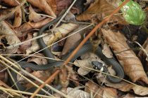 agar-rumah-aman-dari-ular