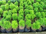 contoh-tanaman-hijau