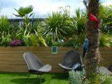jenis-tanaman-roof-garden