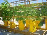 jenis-tanaman-roof-garden2