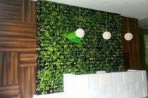 memasang-rumput-sintetis-dinding