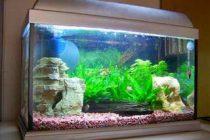 membuat-filter-aquarium-sendiri
