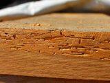 mengatasi-kumbang-bubuk-kayu