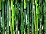 proses-pengawetan-bambu
