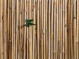 proses-pengeringan-bambu