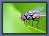 tips mengusir lalat dari rumah