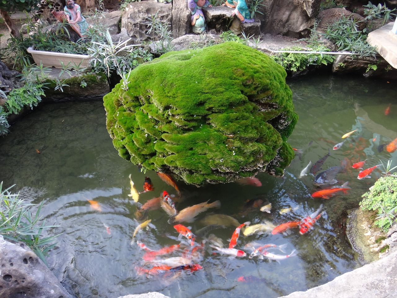 9 Langkah Cara Membuat Kolam Ikan Koi Dari Beton Agar Tak Bocor Arafuru
