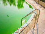 air-kolam-renang-berwarna-hijau