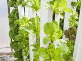 apa-itu-vertical-garden