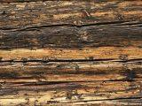 cara-menambal-kayu-keropos