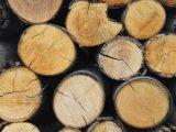 cara-mengawetkan-kayu-alami