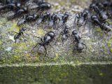 cara-mengusir-semut