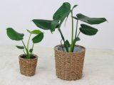 cara-merawat-tanaman-indoor