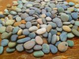 ciri-ciri-batu-koral