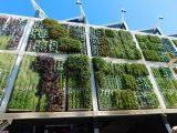 jenis-jenis-vertical-garden