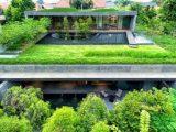 jenis-tanaman-roof-garden4