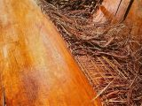 kayu-kelapa-yang-berkualitas