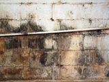 membersihkan-jamur-di-tembok
