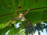 membersihkan-sarang-laba-laba