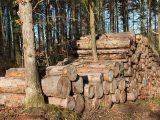 membuat-furniture-batang-pohon