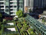 membuat-roof-garden