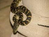 mencegah-ular-masuk-rumah