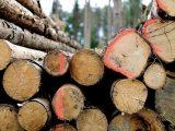 mengeringkan-kayu-secara-alami