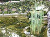 menghias-kolam-ikan-cantik