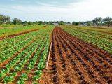 menyuburkan-tanah-pertanian