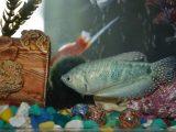 merawat-akuarium-ikan-hias
