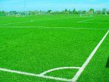 rumput-lapangan-sepak-bola