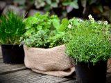 tanaman-tumbuh-subur