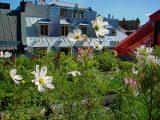 tanaman-untuk-roof-garden
