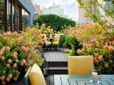 tanaman-yang-cocok-roof-garden