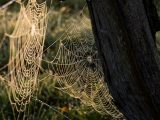 tips-mengusir-laba-laba